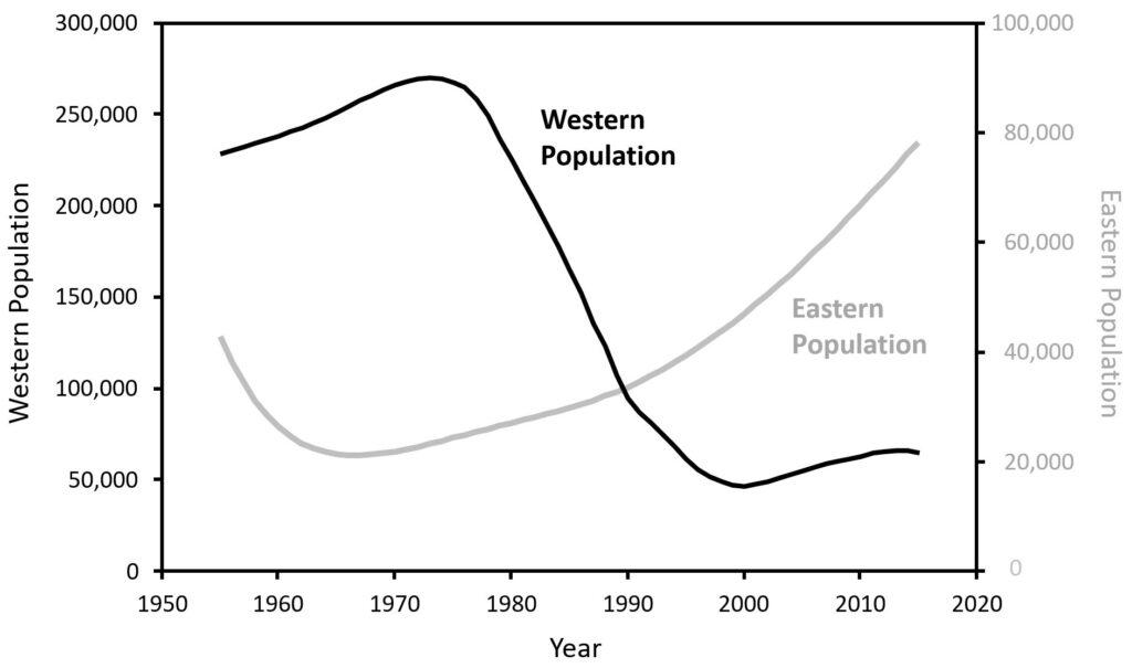 Sea lion population